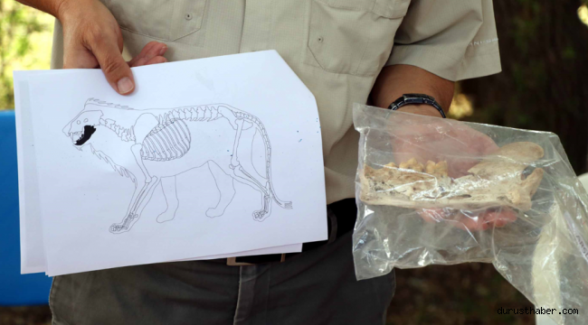 Kayseri'de 4 bin yıl öncesine ait aslan kemiği bulundu